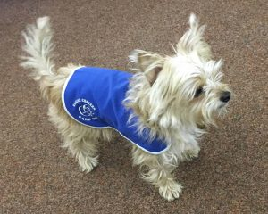 Bushy, one of Canine Concerns therapy dogs, helps litigants and staff at Chelmsford county court facing stressful cases.