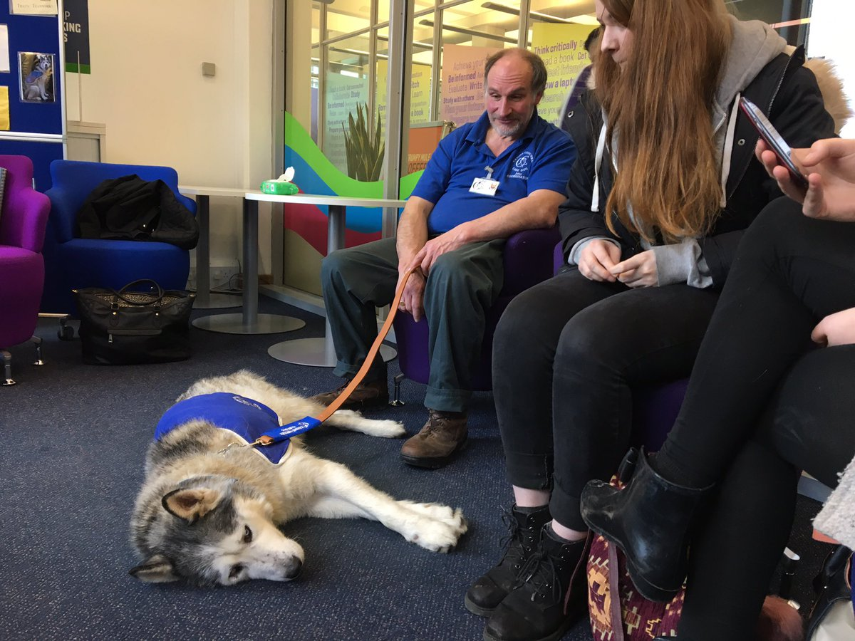 Canine Concern dogs - Jaxx at Leeds University